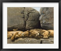 Framed Two Lions Head To Head