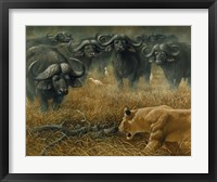 Framed Lioness And Cape Buffalos