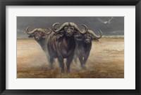 Framed Cape Buffalos