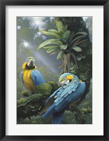 Framed Blue And Yellow Macaws