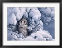Framed Long-Eared Owl