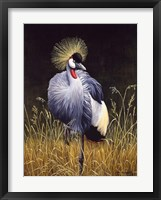 Framed Crowned Crane