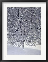 Framed Snow Tree With Magpies
