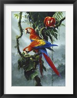 Framed Red And Yellow Macaws