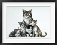 Framed Cat Family