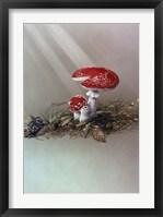 Framed Mushrooms