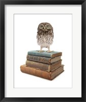 Framed Owl And Books