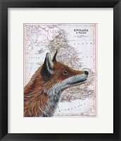 Framed British Fox