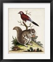 Framed Edwards Squirrel