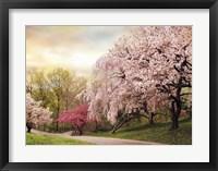 Framed Asian Cherry Grove