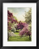 Framed Cherry Tree Grove