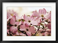 Framed Dogwood Delight