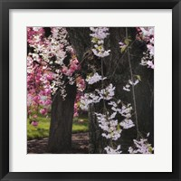 Framed Japanese Cherry