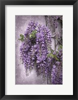 Framed Wistful Wisteria