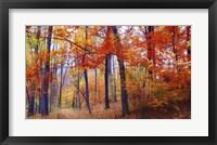 Framed Autumn Woodland