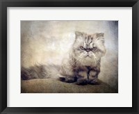 Framed Cranky Cat