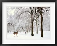 Framed Winter's Breath