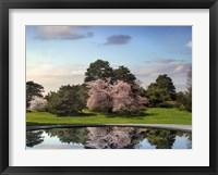 Framed Cherry Tree Reflections