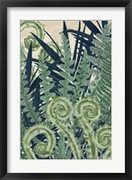 Framed Fiddlehead Waltz II
