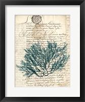 Framed Vintage Teal Seaweed I