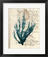 Framed Vintage Teal Seaweed II