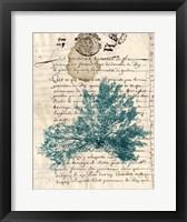 Framed Vintage Teal Seaweed III