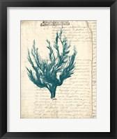 Framed Vintage Teal Seaweed V