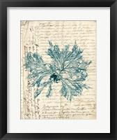 Framed Vintage Teal Seaweed VI