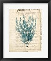 Framed Vintage Teal Seaweed VII