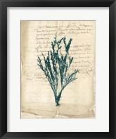 Framed Vintage Teal Seaweed VIII