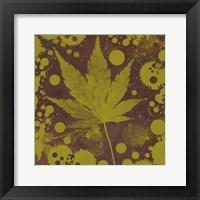 Framed Botany Expressions II