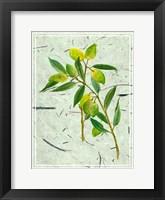 Framed Olives on Textured Paper I