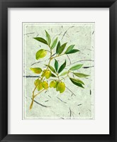 Framed Olives on Textured Paper II