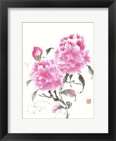 Peonie Blossoms II Framed Print