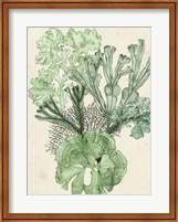 Framed Seaweed Composition I