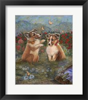 Framed Shelties