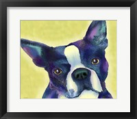 Framed Boston Terrier 1