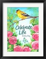 Framed Finch Celebrate Life