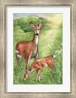 Framed New Mother and Fawn