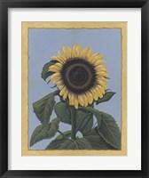 Framed Apple Sunflower