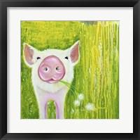 Framed Pig