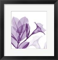 Framed Lavender Mandelilla