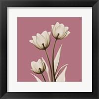Framed Pink Luster Tulips