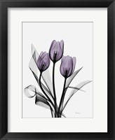 Framed Three Purple Tulips H14