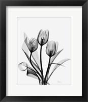 Framed Three Gray Tulips H14