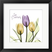 Framed Live Passionately Tulips
