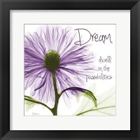 Framed Purple Chrysanthemum Dream