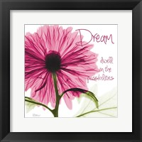 Framed Pink Chrysanthemum Dream