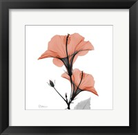 Framed Soft Hibiscus