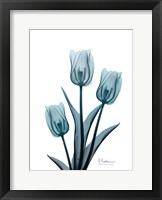 Framed Midnight Sky Tulip Trio 2